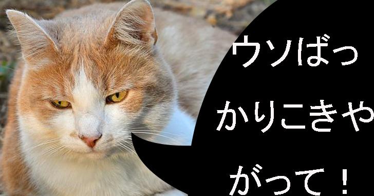 ウソつきに猫が怒る